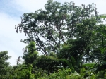 Bocas del Toro (deel 1).