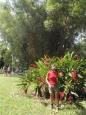 Bocas del Toro (deel 4).
