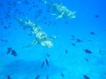 Bora Bora _1