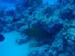 Bora Bora_52