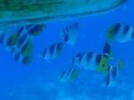 Bora Bora_57