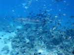 Bora Bora _3