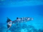 Bora Bora _4