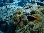 Bora Bora _6