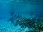 Fakarava (Îles des Tuamotu)