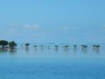 Fiji 1_30