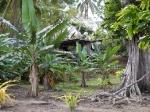 Fiji 1_35