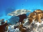 Fiji deel 2_12