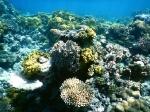 Fiji deel 2_13