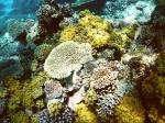 Fiji deel 2_15