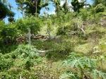 Fiji deel 2_23
