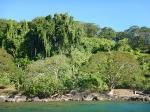 Fiji (6), Kadavu, Vanua Balavu en ... (juli - oktober 2017).