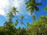 Kiribati _28