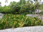 Kiribati _39