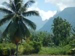 Tahiti_14