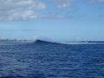 Tahiti_3