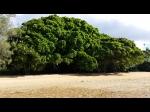 Tonga2_19