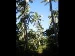 Tonga2_47
