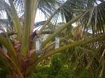 Tuvalu_70