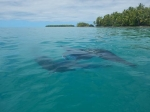 Tuvalu_83