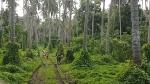 Vanuatu1_34